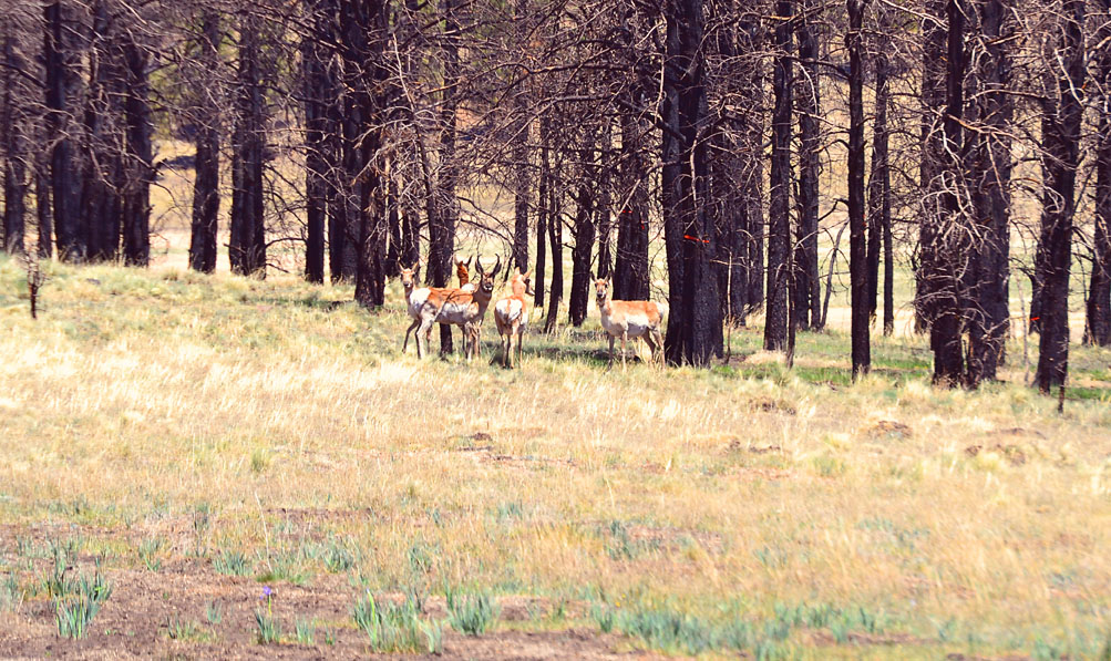 May Ranch Retreat – Where the Antelope Play!