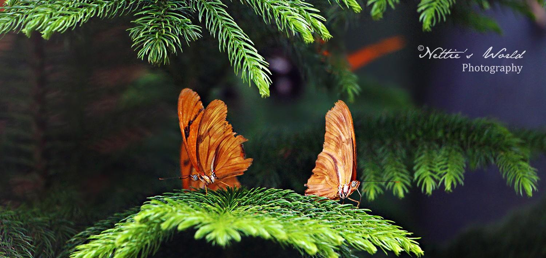 Butterfly Wonderland, 2016